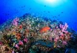 Clima: ecosistema marino sconvolto dal riscaldamento globale