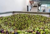 Dagli scarti dell'olio d'oliva innovazioni green per farmaci e alimenti