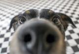 Scoperto come fanno i mammiferi a distinguere gli odori