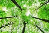 Faggio abruzzese: così si protegge dai cambiamenti climatici