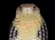 Virus cinese: dai serpenti all'uomo
