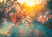 """Luce solare: quando è """"troppa"""" le piante si auto-proteggono"""
