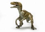 Dinosauri: i Velociraptor cacciavano in solitaria