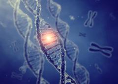 Scoperti rari geni alla base della longevita' dei centenari